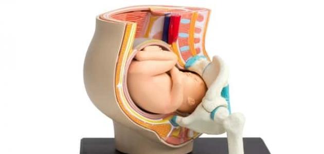 أعراض الرحم المائل