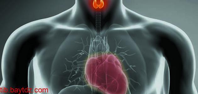 تأثير الغدة الدرقية على القلب