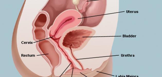 علاج التهاب المهبل بالثوم