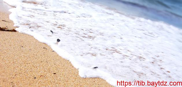 فوائد زبد البحر