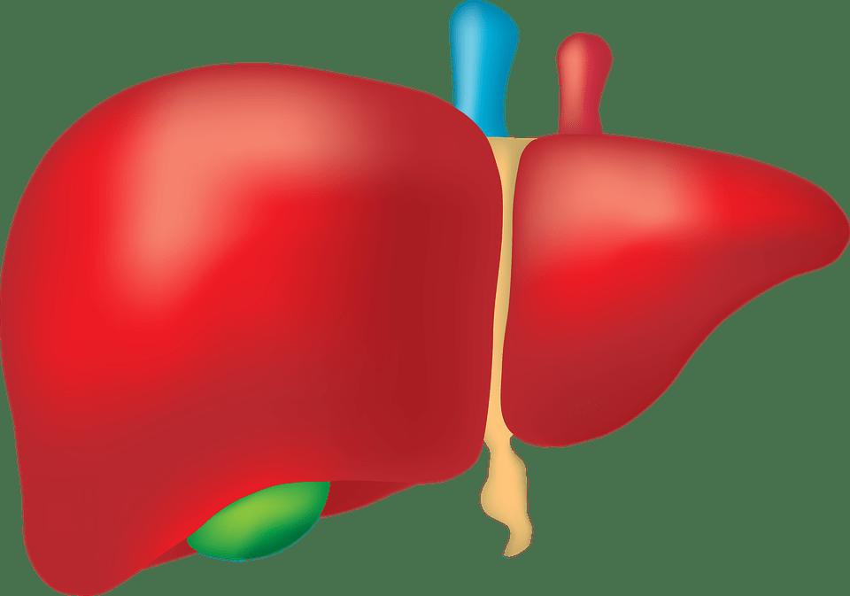 كسل الكبد وخموله.. ماهي اعراضه؟